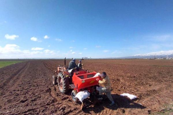 خبرنگاران پیش بینی کشت سیب زمینی در 19 هزار هکتار از اراضی زراعی استان اردبیل