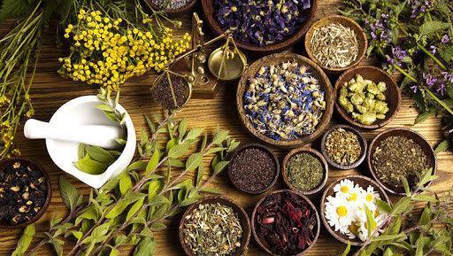 گیاهان دارویی آینده کشاورزی خراسان رضوی است
